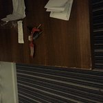 Foto di Holiday Inn Express Tamworth
