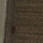 Cucaracha en la habitación
