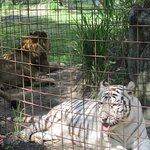 Photo of Big Cat Rescue