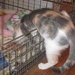 Foto de Big Cat Rescue