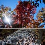 Bucklin Trail & Mount Killington Peak (10/2016)