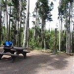 Foto di Grant Village Campground