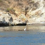 Heron in one of the many beautiful coves you visit