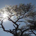 Zebra Kalahari Lodge Foto
