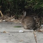 Extremely cute hare at the patio of the hotel. Almost every time I passed by he was there soakin
