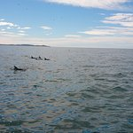 Dolphin Encounter Foto