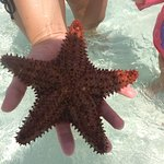Caicos adventures a must !!...star fish
