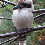 Kookaburra Motor Lodge Picture