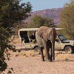 Dessert Elephants Conservation - Kunene Region