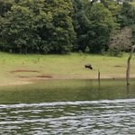 Photo de Periyar Wildlife Sanctuary