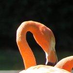 Foto di Antwerp Zoo (Dierentuin)