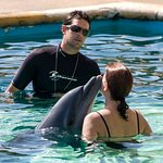 Snuggle with a Dolphin
