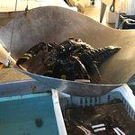 Beal's Lobster Pier Foto
