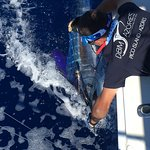 DBM Azores - Sport Fishing Charters