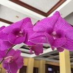 The Naples Beach Hotel & Golf Club Foto