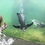 Photo de Scarborough SEA LIFE Sanctuary