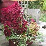 clawfoot tub planter