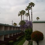 Anaheim Plaza Hotel and Suites Foto