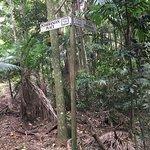 Tailwaggers Rainforest Retreat