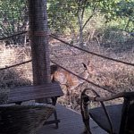 Photo de Ndarakwai Ranch Camp