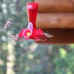 Kolibris auf Veranda