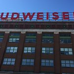 Budweiser Brewery Tours Foto
