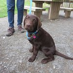Safe trails for new puppies at Hicks Lodge