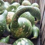 Swan gourds