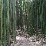 Photo of Pipiwai Trail