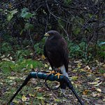 New England Falconry