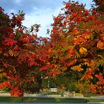 Indian Summer, glorios colors