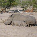 Rhino nap time