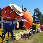 Gayndah's Big Orange