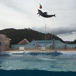 Shimoda Aquarium Foto