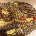 Grilled seabas & sea breams...