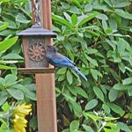 Feeders outside the enclosed porch