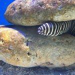 Underwater World Langkawi Foto