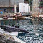 Foto de Kinosaki Marine World