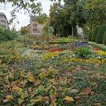 Friedrichshafen Blumen überall