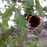 Botanical Gardens (Botanisk Have) Foto