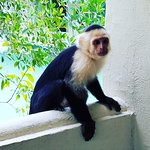 """The locals call them """"criminal monkeys"""" because they want your food, but we think they're cute!"""