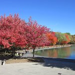 Arbre rouge prédominant la série autour du lac
