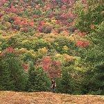 Fall foliage Macauley Mtn.