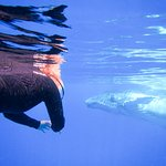 Whale swimming, get up close and personal