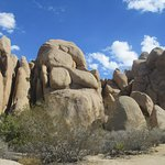 Jumbo Rocks Campground, Joshua Tree National Park, CA