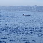 Capt. Dave's Dolphin & Whale Watching Safari Foto