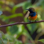One of the many birds sighted on the grounds - Olive Backed Sunbird