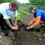 Organic Chef's Garden
