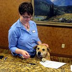 Every evening I was greeted at the front desk by Ginger. She is a rescue dog.