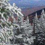 Amazing foliage with snowy pine trees! Frozen!!